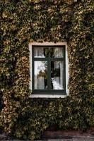 Glasfenster mit Efeu