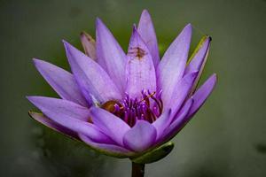 lila Blütenblattblume