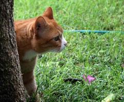 Katze versteckt sich hinter Baum