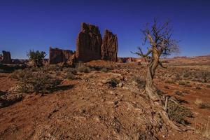 Baum in der Nähe von Felsen in einer Wüste