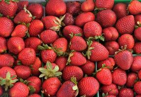 frische rote Erdbeeren foto