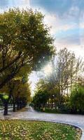 Sonne scheint durch die Bäume