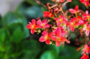Nahaufnahme von roten Blumen