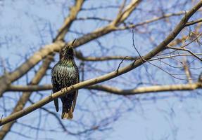 der schwarzflügelige Vogel