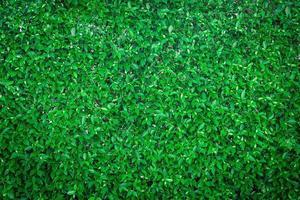 Draufsicht auf grünes Gras
