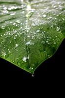 Wassertropfen auf Blätter