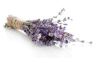 Lavendelblüten isoliert auf Weiß foto