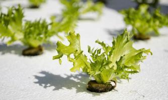 Bio-Gemüse foto