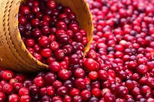 viel Cranberry- und Ulmenglas foto