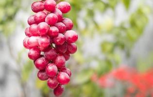 Trauben hängen in den Bäumen foto
