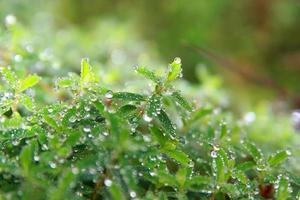 grüne Pflanze und Wassertropfen foto