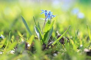 wilde Blumen auf dem Feld