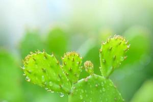 Nahaufnahme des Kaktuswachstums