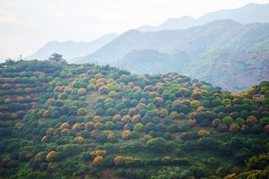 Obstgarten auf dem Hügel foto