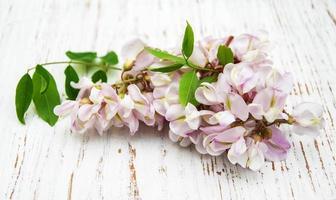 Akazienblüten foto
