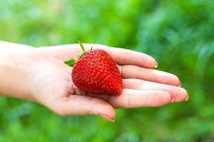 Erdbeerhand foto