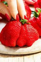 Hand mit roten Nägeln, die Gigattella-Erdbeere halten