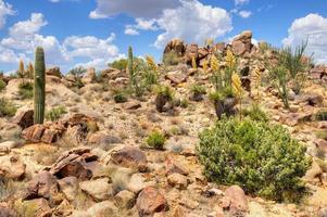 Yucca foto