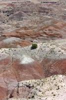 bunt bemalte Wüste und zähe Vegetation foto