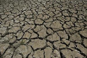 Dürre in Afrika foto