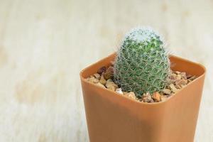 Kaktus auf hölzernem Hintergrund