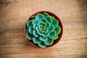Kaktus auf Holzhintergrund. foto