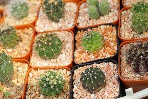 Nahaufnahme des Kaktus foto