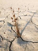 Unkrauttrocknung und trockener Boden in trockenen Gebieten foto