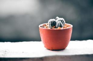 Kaktus auf der Terrasse mit unscharfem regnerischem Tageshintergrund
