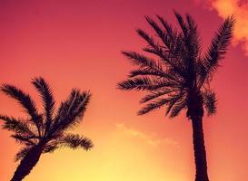 Vintage tropische Palmen gegen Himmel bei Sonnenuntergangslicht