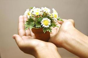 Hand hält einen Blumentopf