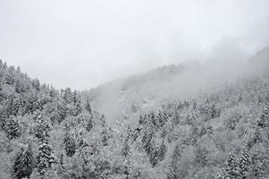 nebliger Wald