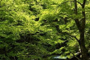 Wald von frischem Grün foto