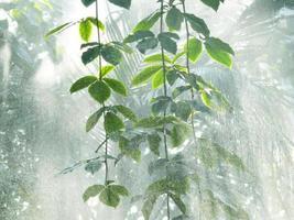 amazonischer Regenwald