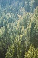 Licht auf österreichischen Wald foto