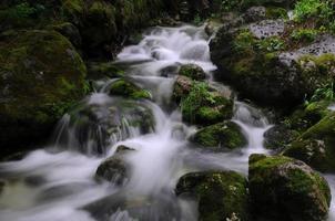 Fluss im Wald