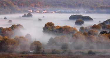 Nebel im Wald foto