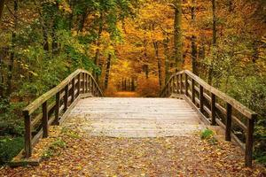 Brücke im Herbstwald foto