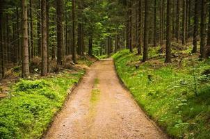 Weg im Wald foto
