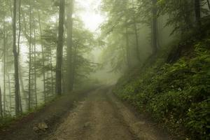 nebliger Wald foto