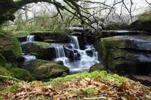 Wasserfall in einem Wald foto