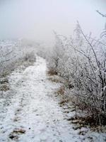 gefrorener Wald foto