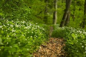 Waldlandschaft im Frühjahr foto