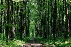 schöner grüner Wald foto