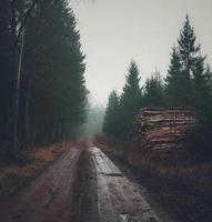 Straße durch nebligen Wald foto