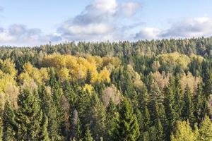 bunter Herbstwald foto