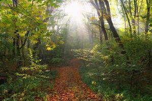 Wald im Herbst foto