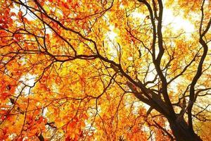 König des Waldbaumes foto