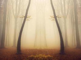 magische Symmetrie im nebligen Wald foto