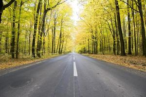 Straße im Wald foto